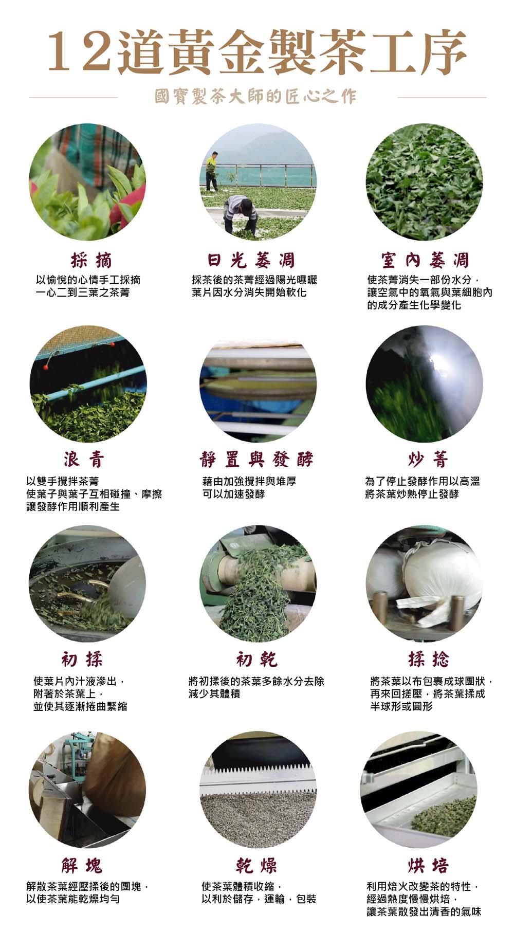 12道黃金製茶工序 製茶的過程