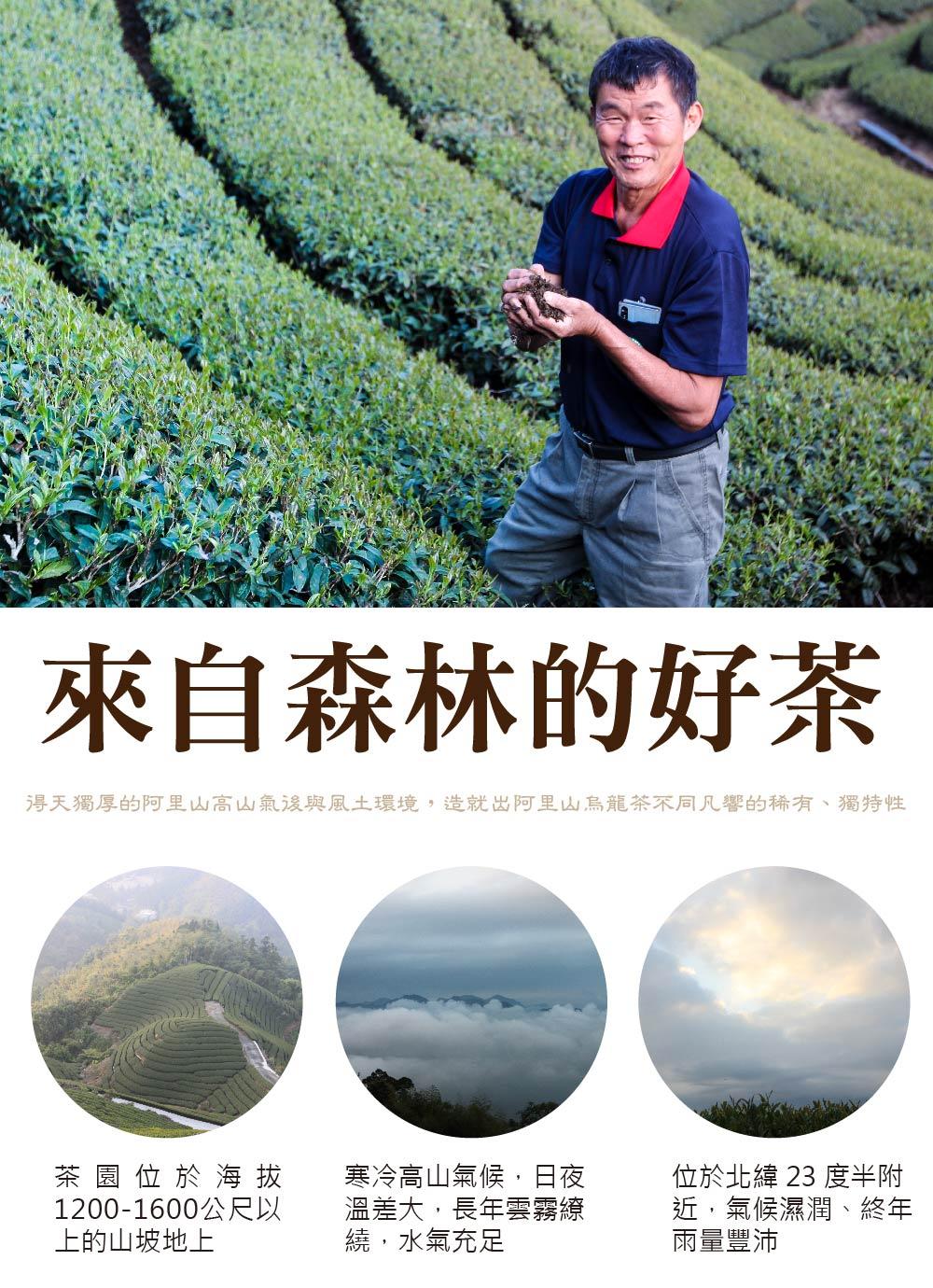 阿里山茶園得天獨厚的阿里山高山氣後與風土環境,造就出好喝的阿里山烏龍茶
