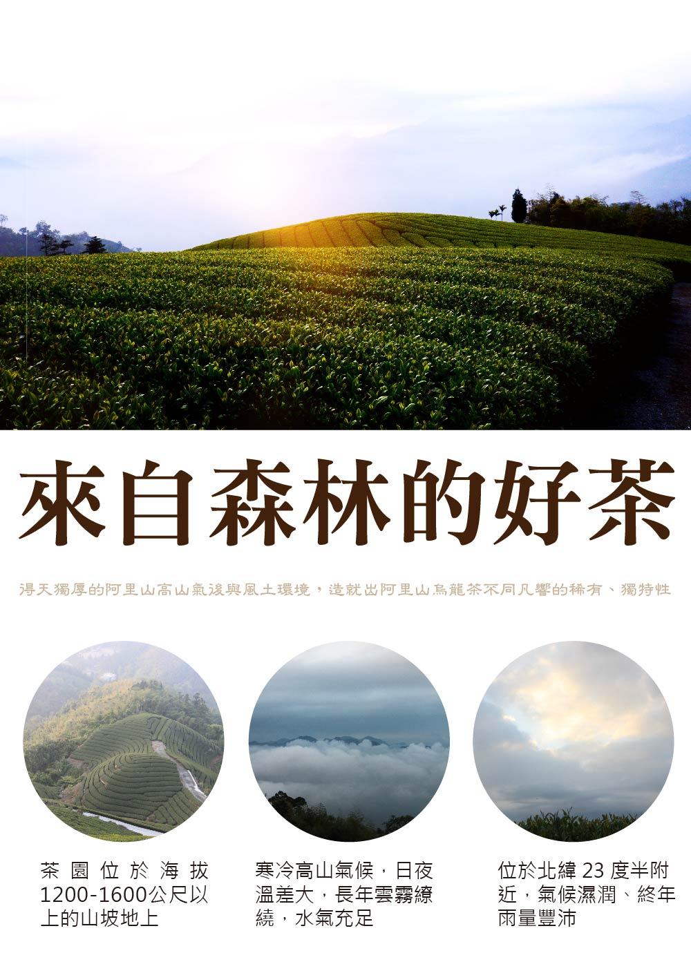 阿里山茶園得天獨厚的阿里山高山氣後與風土環境,造就出好喝的阿里山金萱茶